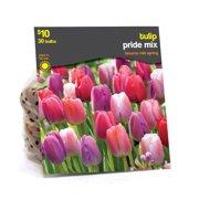 Tulip Pride Mixed