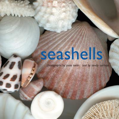 seashells walmart com