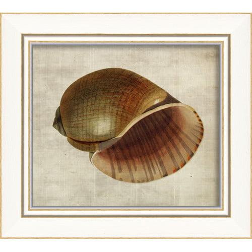 The Artwork Factory Seashell Framed Painting Print