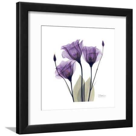 Royal Purple Gentian Trio Purple X-ray Photography Flowers Framed Print Wall Art By Albert Koetsier