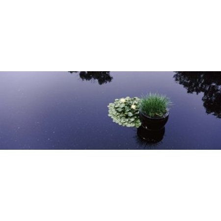 Water lilies with a potted plant in a pond Olbrich Botanical Gardens Madison Wisconsin USA Poster Print