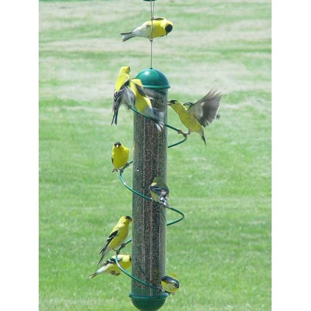 Bird Quest SBF2G 17 Spiral Thistle Bird Feeder - Green Green Spiral Thistle