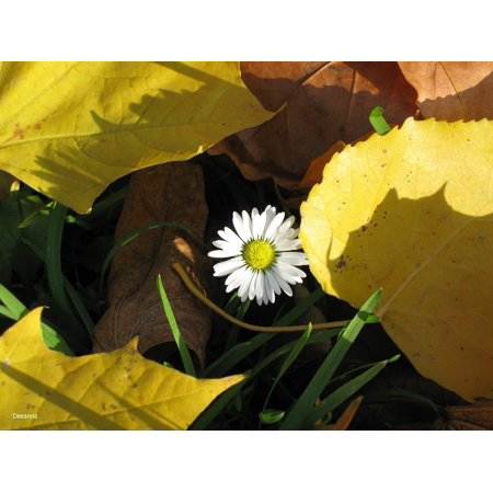 Peel-n-Stick Poster of Yellow Autumn Weather Leaf Daisy Poster 24x16 Adhesive Sticker Poster Print