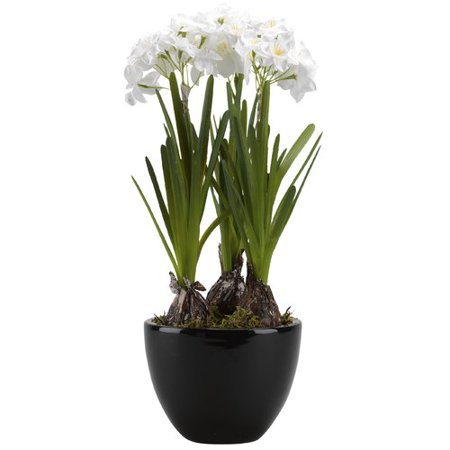 Orren Ellis Paperwhite Bulbs In Floor Floral Arrangement In Planter