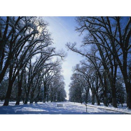 Tree Lined Promenade in Winter, Liberty Park, Salt Lake City, Utah, USA Print Wall Art By Scott T.