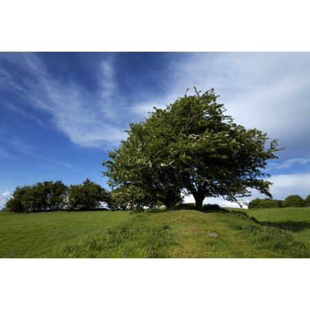 Fairy Tree  Hawthorn  On The Bank Of The Royal Enclosure At Tara Hill Of The Kings   Also Known As Teamhair Na Riogh County Meath Ireland Canvas Art   Panoramic Images  27 X 9