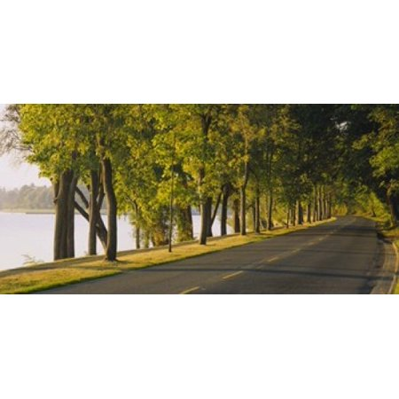 Trees along a road Lake Washington Boulevard Seattle Washington State USA Poster