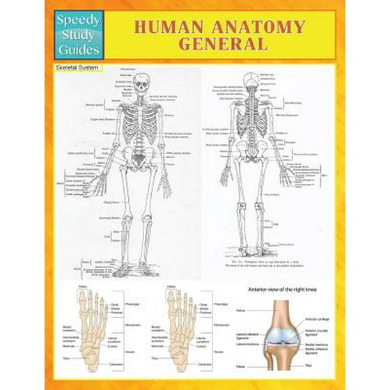 Human Anatomy General Speedy Study Guides Walmart