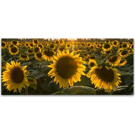 Trademark Fine Art  Sun Flower Love  Canvas Art By Kurt Shaffer