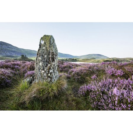 Standing Stone and Heather, Creggenan Lake, North Wales, Wales, United Kingdom, Europe Print Wall Art By Janette Hill