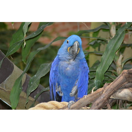 LAMINATED POSTER Pittsburgh National Aviary Bird Parrot Pa Blue Poster  Print 11 x 17