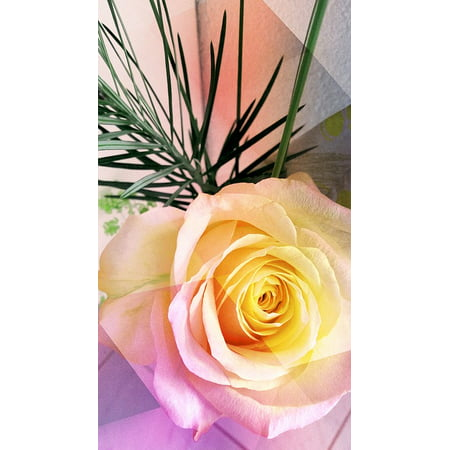 Love 24 Roses (LAMINATED POSTER Yellow Rose Yellow Rose Friendship Flowers Love Poster Print 24 x 36)