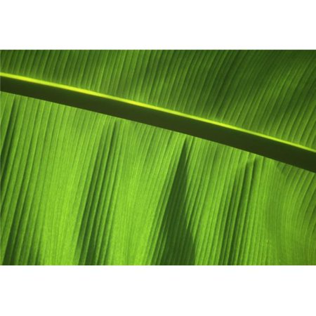 Posterazzi DPI1885524LARGE Green Leaf, Close-Up Poster Print, 36 x 24 - Large - image 1 of 1