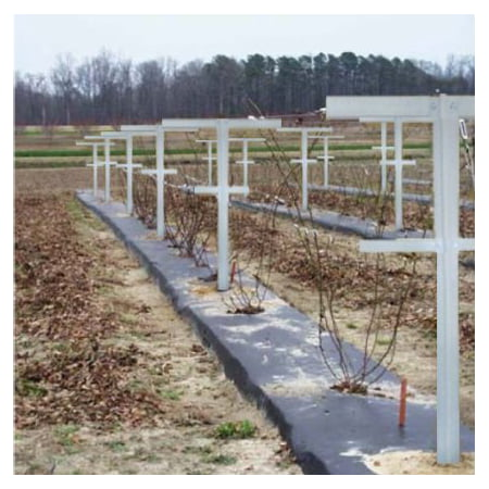 EcoTrellis, Raspberry Trellis with Adjustable Arms, Raspberry Stake, Vineyard Trellis garden trellis for climbing vining plant support, 6 Pack