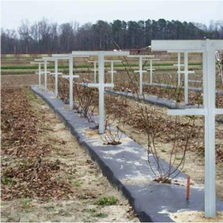 EcoTrellis, Raspberry Trellis with Adjustable Arms, Raspberry Stake, Vineyard Trellis garden trellis for climbing vining plant support, 6 - Vine Trellis
