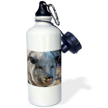 3dRose Pot Belly Pig, Sports Water Bottle, 21oz