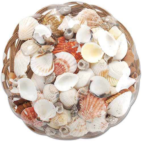 Darice Sea Shell Basket, 10""