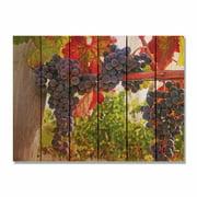 Day Dream HQ OV2216 22 x 16 in. Old Vines Inside & Outside Cedar Wall Art