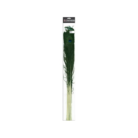 Zucker Feather Peacock Eye Stem 25 35  12Pc