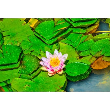 LAMINATED POSTER Nature Wallpaper Petals Lotus Flower Garden Pink Poster Print 24 x 36