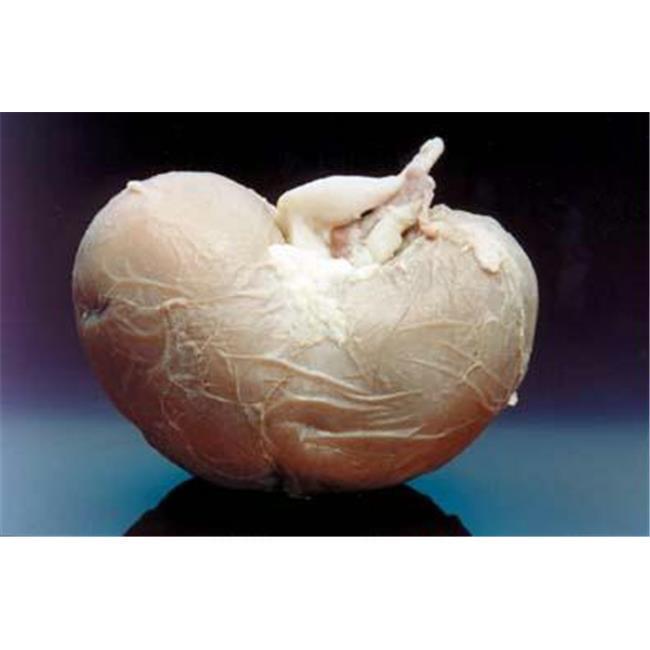 Olympia Sports 11380 Sheep Kidney Toy