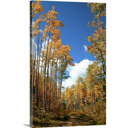 Great Big Canvas Julien Mcroberts Premium Thick Wrap Canvas Entitled Aspen Trees In Fall  Santa Fe  New Mexico