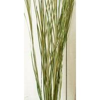Ornamental Wild Grass (Dried) 12 oz Wild Grass Bunch -- Case of 24 bunches - Green
