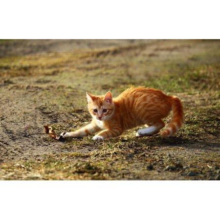 Framed Art for Your Wall Leaf Kitten Play Cat Red Cat Red Mackerel Tabby 10x13 Frame (Tabby Cat Art Painting)