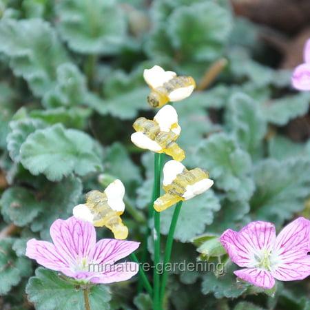 Glow In The Dark Wholesale (Wholesale Fairy Gardens Glow in the Dark Bees, 4 Piece Set for Miniature Garden, Fairy)