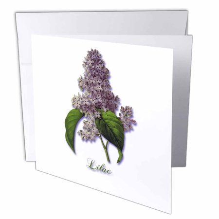 3dRose Lilac, Botanical Print of a Lavender Spring Blooming Fragrant Flower, Greeting Cards, 6 x 6 inches, set of 12 12 Flower Name Card