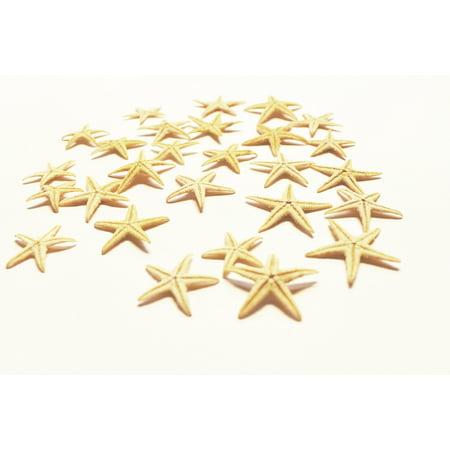 Set of 25 Tiny Mini Starfish - Philippine Tan Flat Sea Stars (1/2