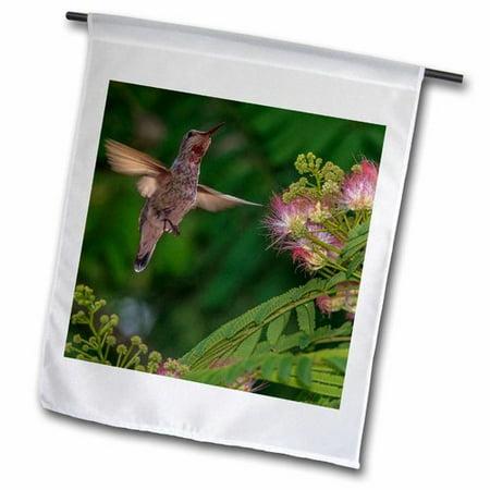 3dRose Hummingbird Feeding Off Silk Tree. California, USA - Tom Norring Polyester 1'6'' x 1' Garden Flag