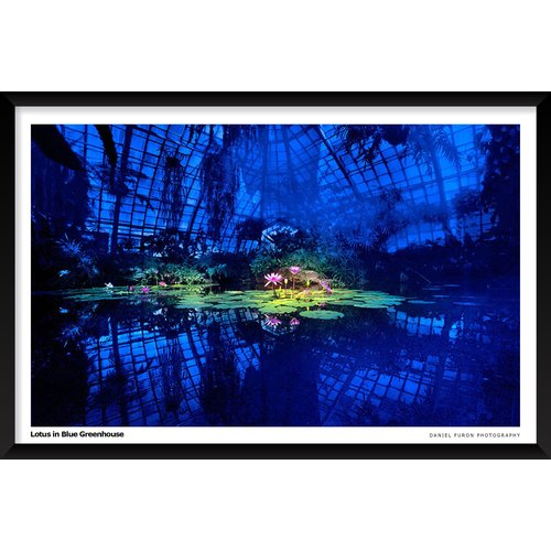 Artography Limited 'Lotus in Blue Greenhouse' Framed Photographic Print Poster by