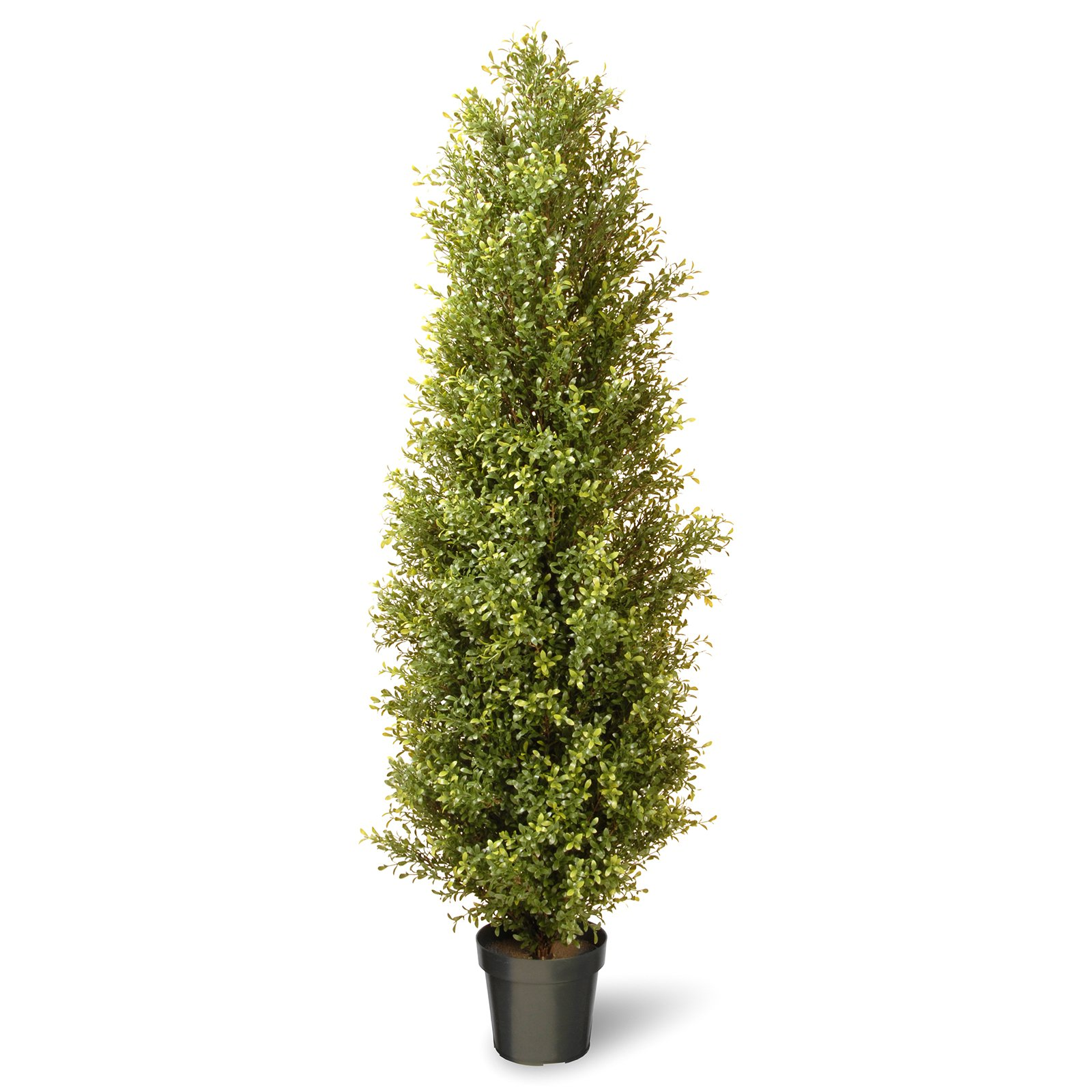 "National Tree 72"" Argentina Plant with Green Pot"