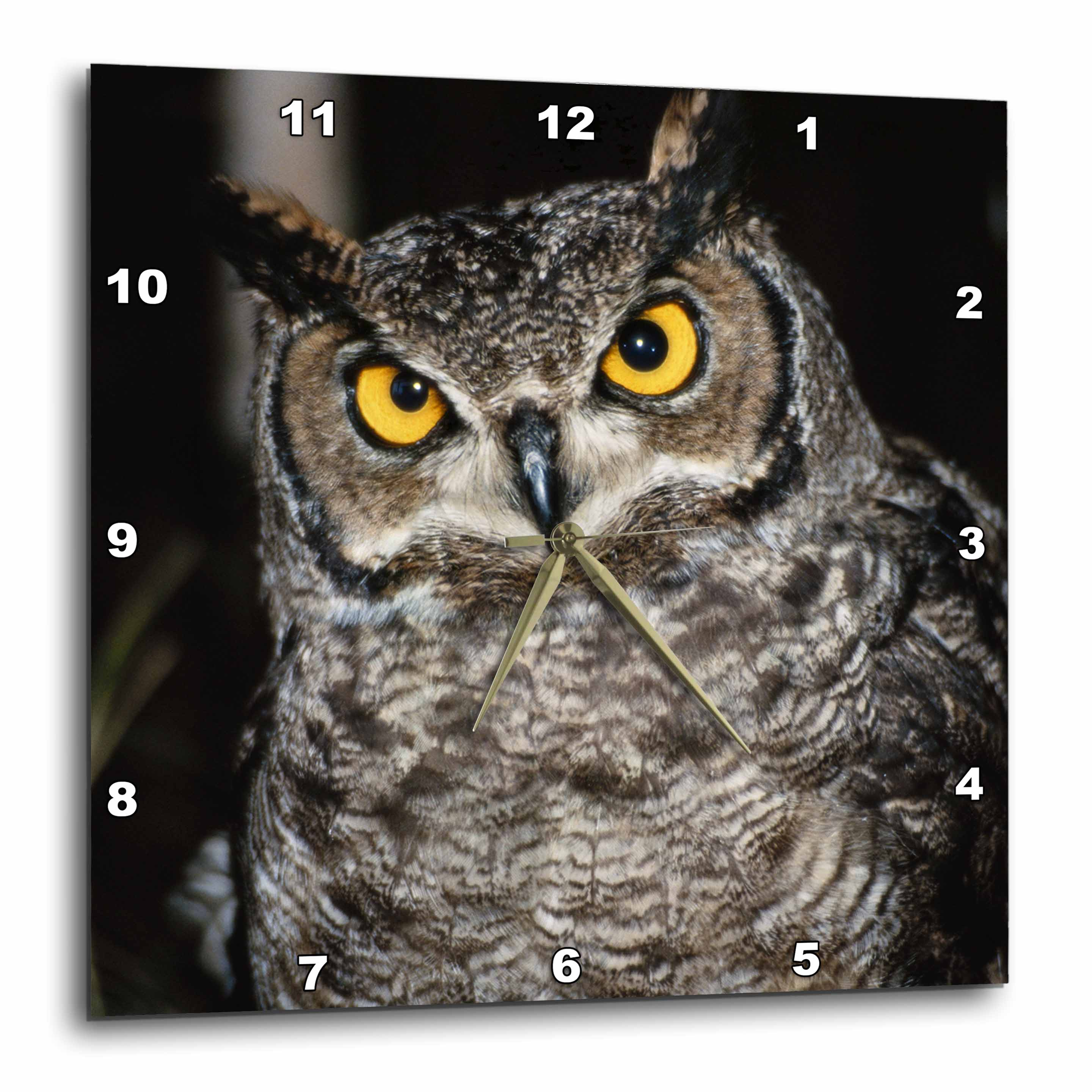3dRose Great Horned Owl , Wall Clock, 15 by 15-inch