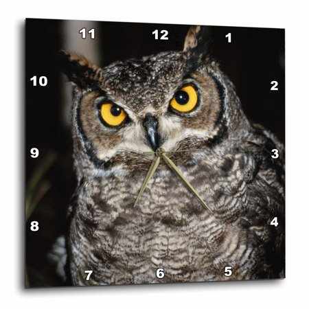 3dRose Great Horned Owl, Wall Clock, 15 by 15-inch