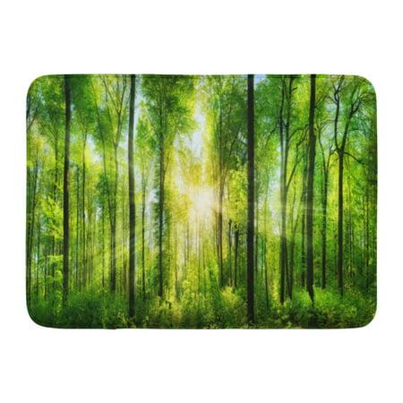 SIDONKU Panorama of Scenic Forest Fresh Green Deciduous Trees The Sun Casting Its Rays Light Through Foliage Doormat Floor Rug Bath Mat 23.6x15.7 inch Cast Bath Single Light