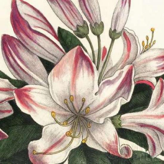 Botanique Square II Canvas Art - Wild Apple Portfolio (24 x 24)