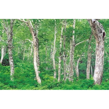 Lush Forest Poster Print by  - 36 x 24 - image 1 de 1