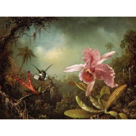 Orchid With Two Hummingbirds Stretched Canvas - Martin Johnson Heade (9 x 12)
