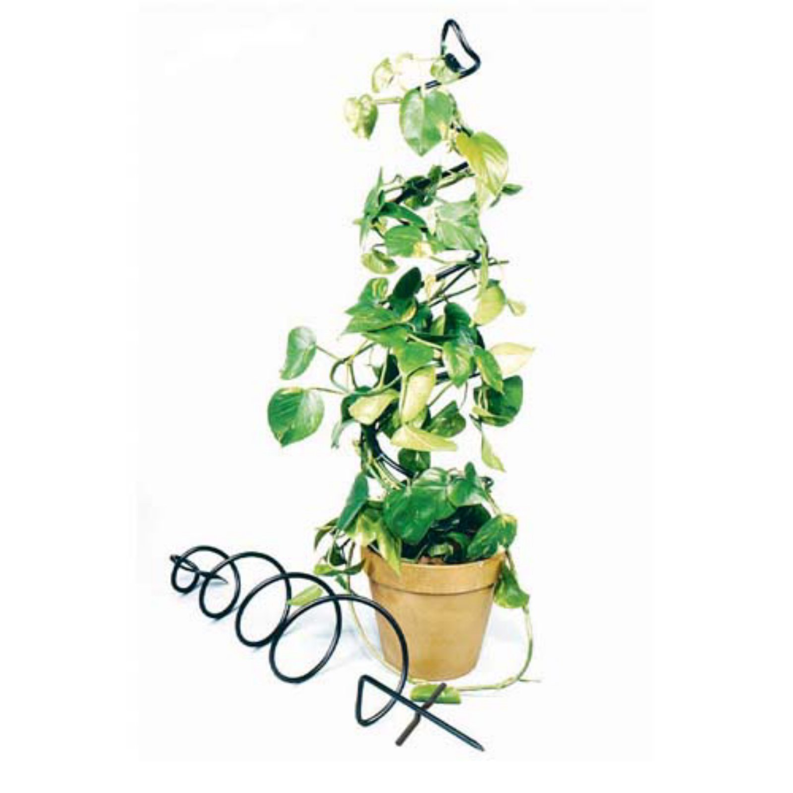 Achla Designs Spiral 3 5 Ft Iron Plant Trellis