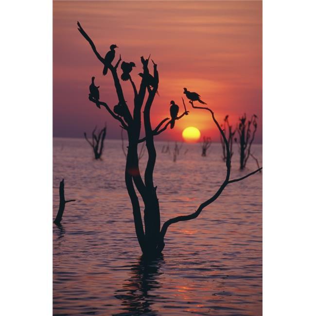 Birds On Tree, Lake Kariba At Sunset Poster Print, 24 x 38 - Large - image 1 de 1