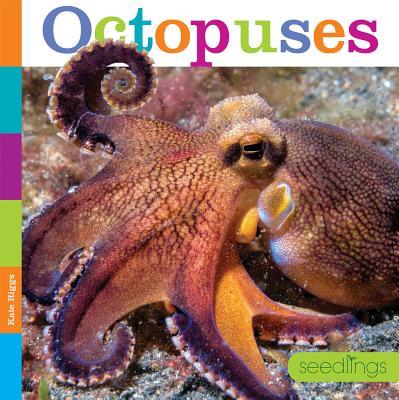 Seedlings: Octopuses
