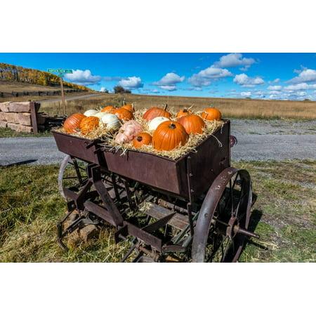 Display of Halloween Pumpkins, Hastings Mesa, Colorado - near Ridgway Print Wall Art](Halloween Displays Nyc)
