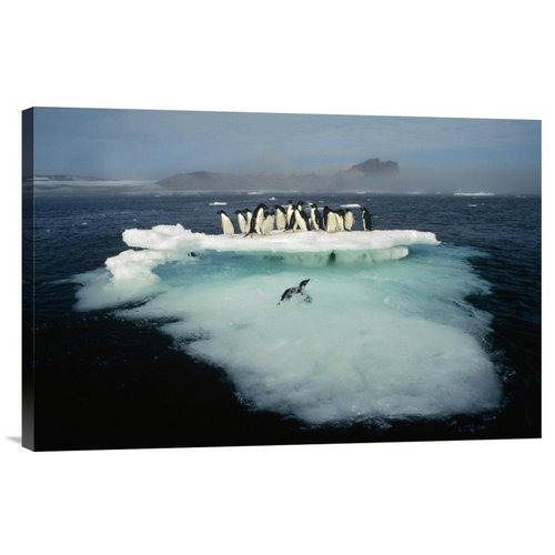 East Urban Home 'Adelie Penguin Crowding on Melting Summer Ice Floe' Photographic Print on Canvas