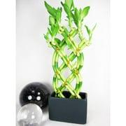 cheap office plants. cheap office plants r