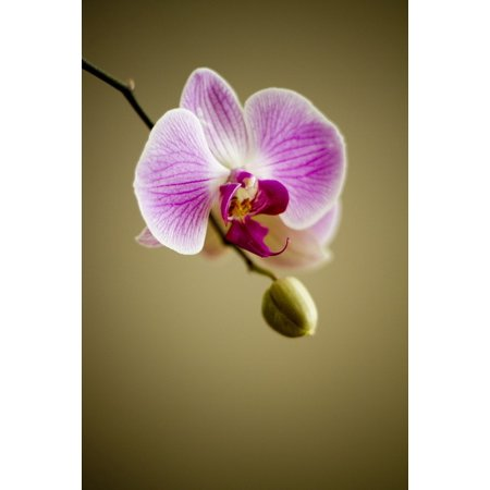 LAMINATED POSTER Nature Flower Flora Lovely Plant Florist Orchid Poster Print 24 x 36