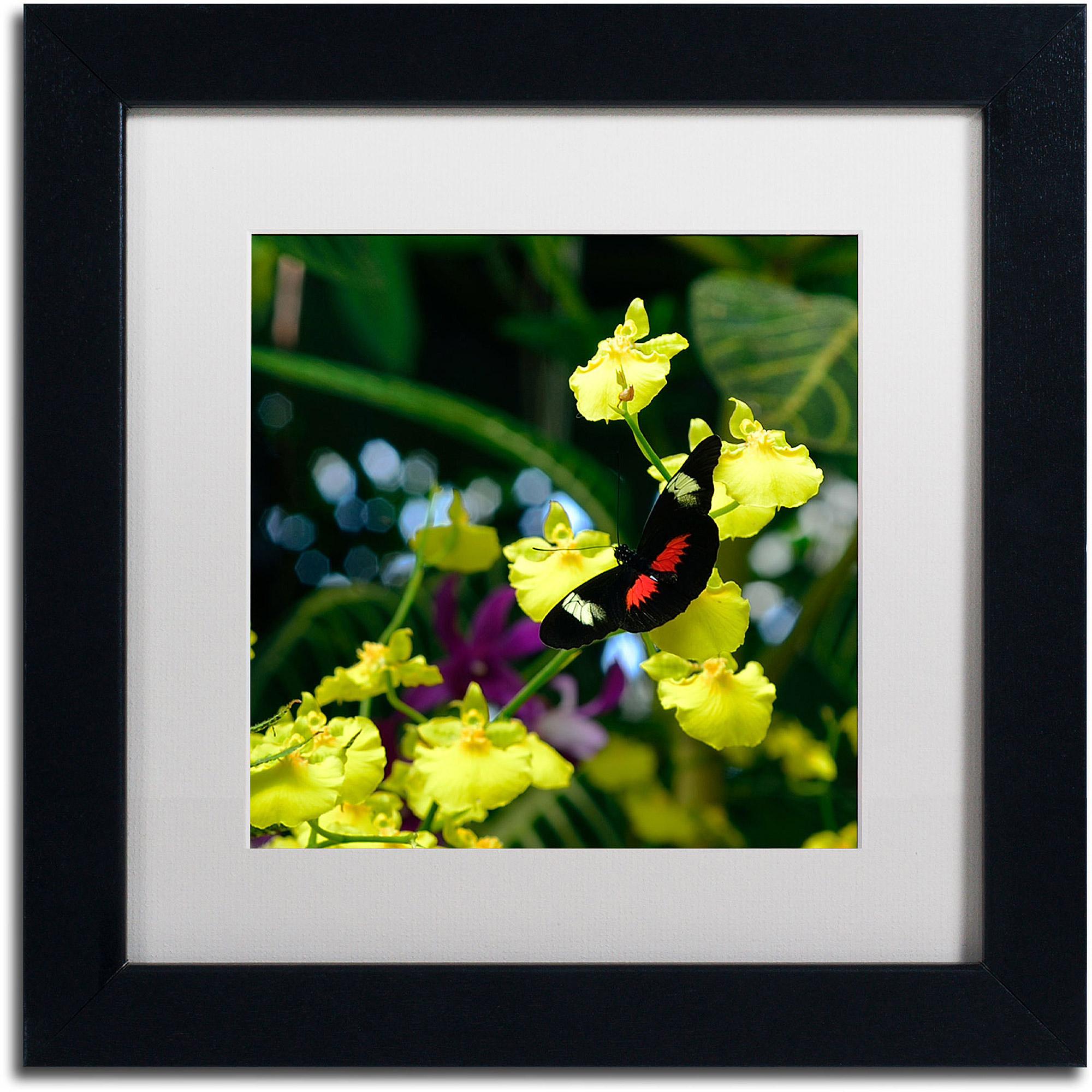 "Trademark Fine Art ""Doris Longwing Butterfly on Orchid"" Canvas Art by Kurt Shaffer, White Matte, Black Frame"
