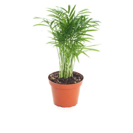 Shop Succulents Live 4