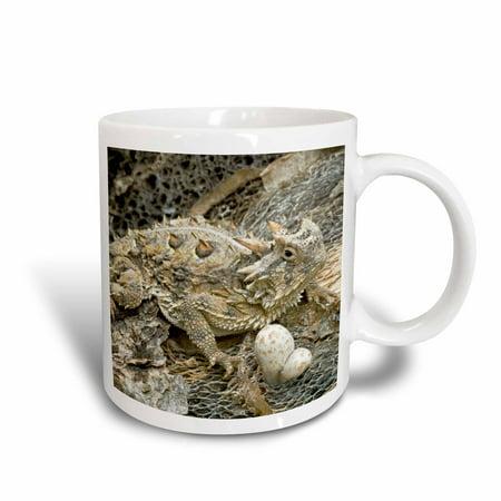 3dRose USA, Texas, Rio Grande Valley. Horned lizard - US44 BJA0134 - Jaynes Gallery - Ceramic Mug, 11-ounce